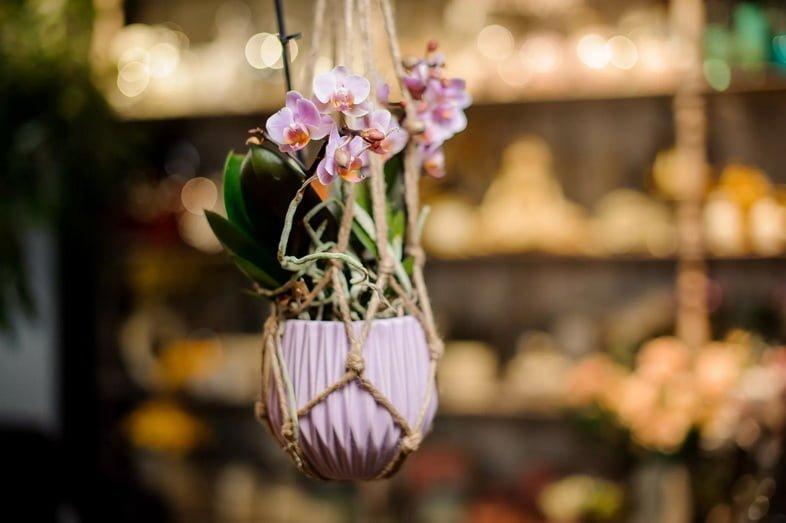 Фаленопсис в цвету в подвесном горшке