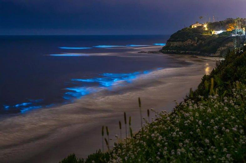 Биолюминесценция на побережье Сан-Диего