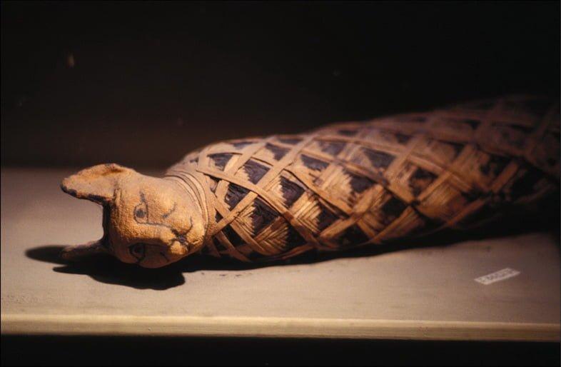 Мумифицированный кот из Древнего Египта.