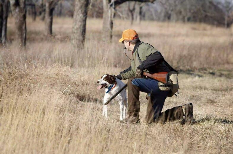 Охота и щенок бретонского эпаньоля