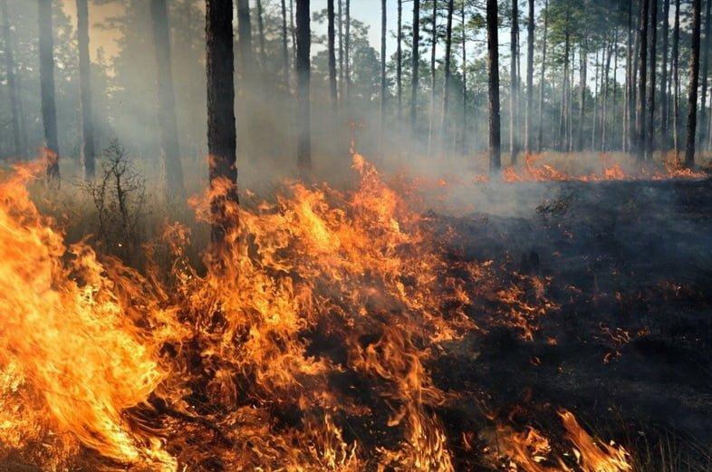 Середина лесного пожара