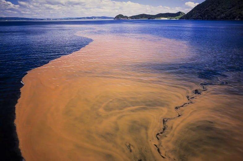 Красный прилив, Новая Зеландия