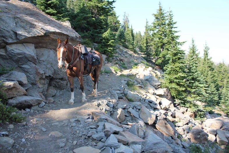 Лошадь на Маршруте тихоокеанского хребта в Орегоне