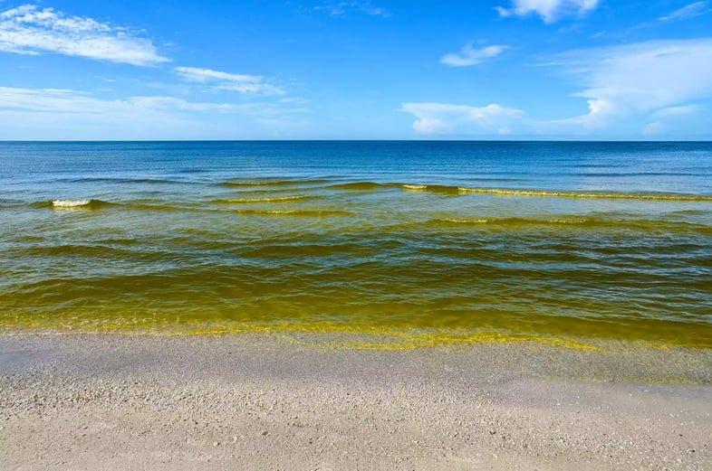 Морской пейзаж показывает цветение коричневых водорослей, или красный прилив.