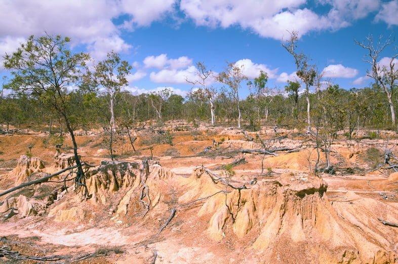 Пейзаж умирающих деревьев и размытой почвы под ясным небом.
