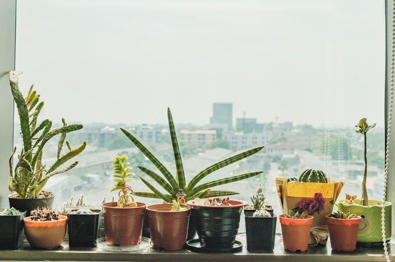 Крупный план растений в горшках на подоконнике напротив неба в городе