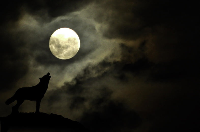 Драматическое полнолуние с силуэтом волка, воющего на луну