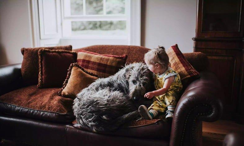 Маленькая девочка и огромный ирландский волкодав