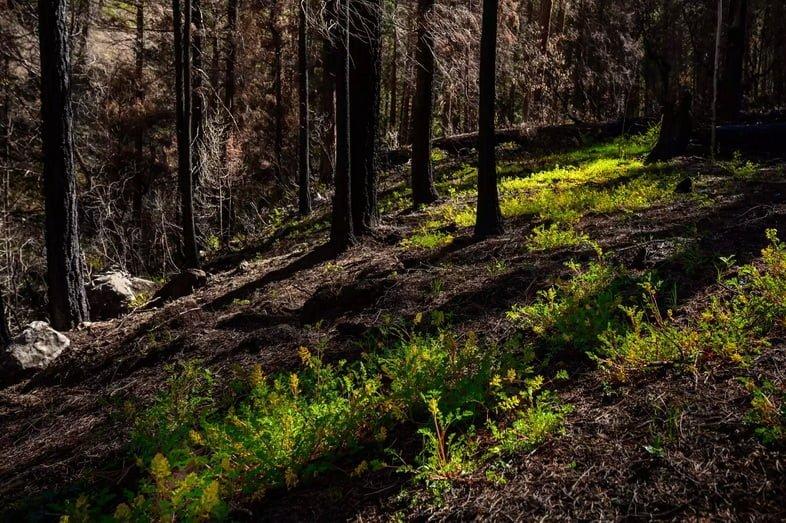 Солнечный свет падает на желтые полевые цветы на склоне холма в выжженном лесу