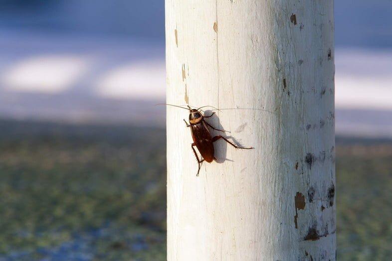 Таракан на белом деревянном столбе