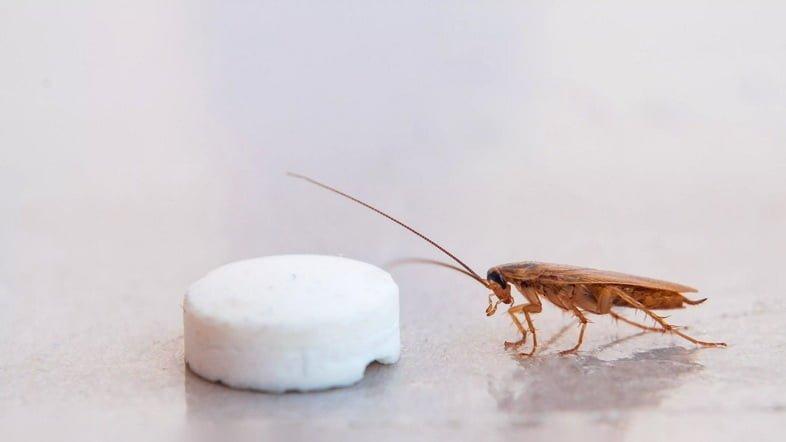 Таракан заполз к приманке в виде пилюли и попадает в ловушку, прилипая к липкой поверхности.