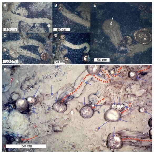 На фото из исследования показаны типичные следы спикул губки.