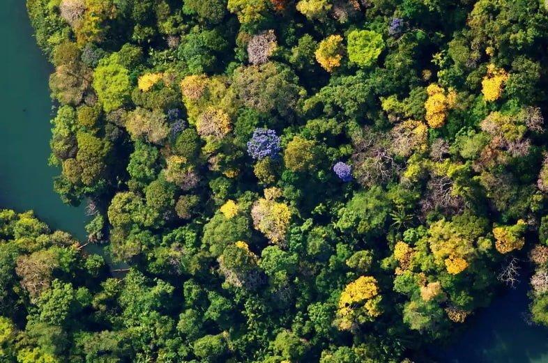 Низменный тропический лес в центральной Панаме