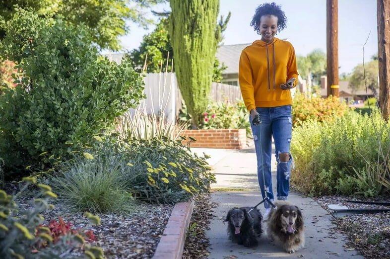 Молодая женщина гуляет с собаками со смартфоном