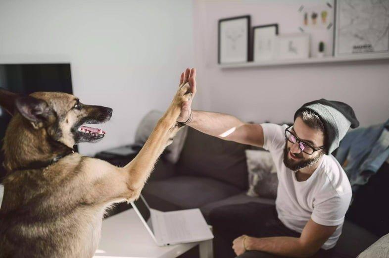 Молодой человек дома дает пять со своей собакой