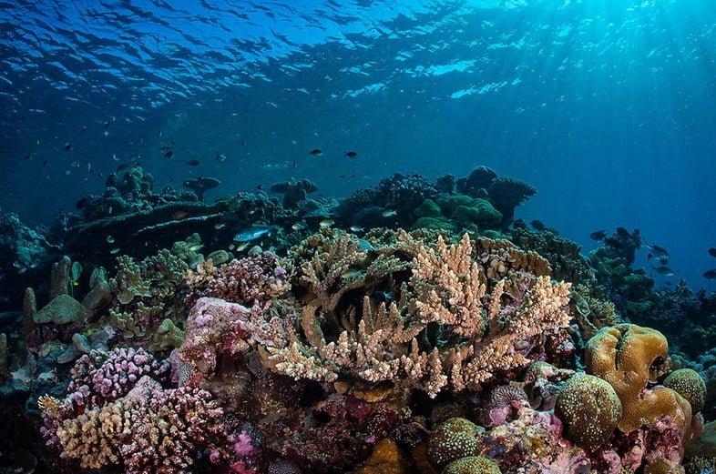 Закисление океана