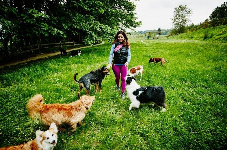 Женщина выгуливает собак в парке