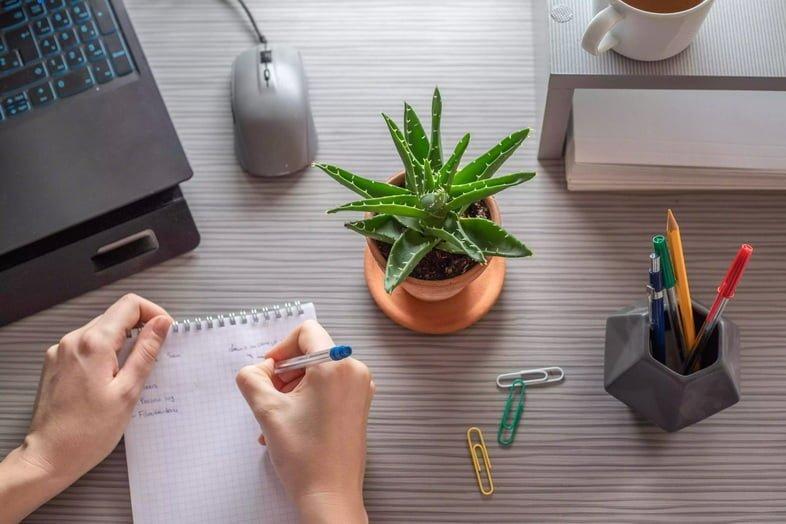 Снимок сверху человека, который пишет на рабочем столе с мини-растением алоэ вера возле компьютера