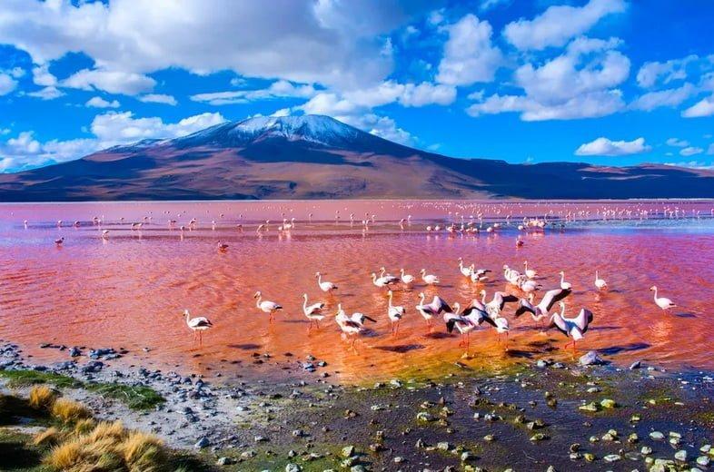 Озеро розового цвета с заснеженной горой вдалеке