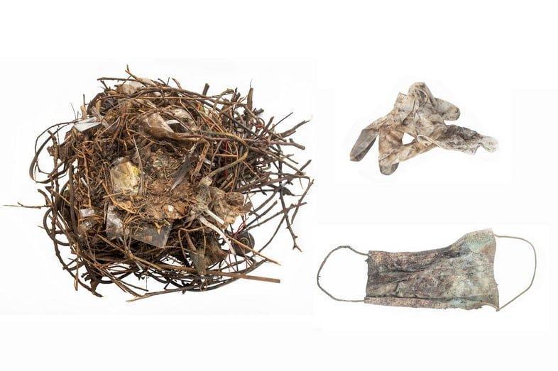 Гнездо обыкновенной лысухи (Fulica atra) частично построено из лицевой маски (GW9792-3) и перчатки (GW9792-4). Гнездо, расположенное на Бистенмаркте, Лейден, Нидерланды, собрано 6 сентября 2020 года.