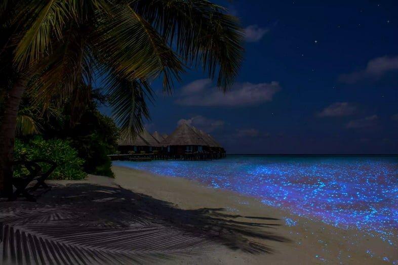 Пляж на Мальдивах с пальмой рядом с биолюминесцентной водой