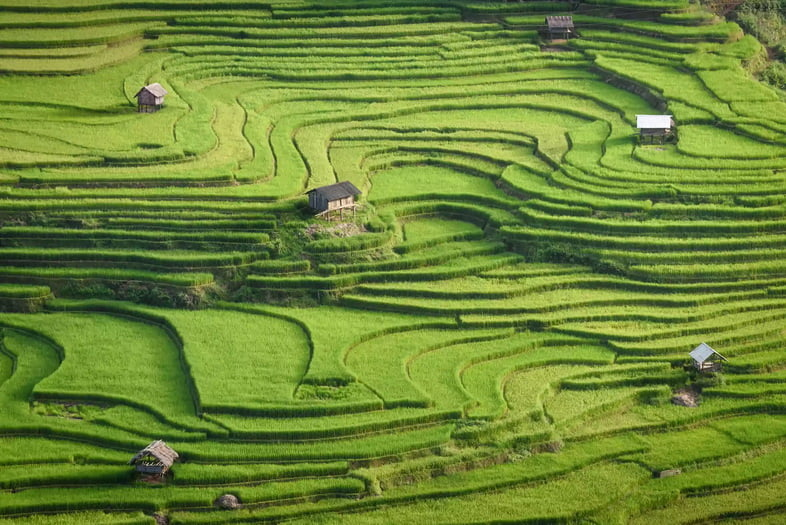 Ярко-зеленые рисовые террасы на холме на Бали