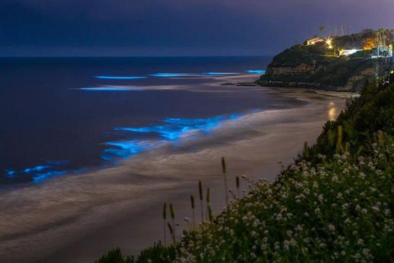 Биолюминесценция на пляже побережья Сан-Диего ночью на пляже Свамис в Энсинитас, Сан-Диего, Калифорния.