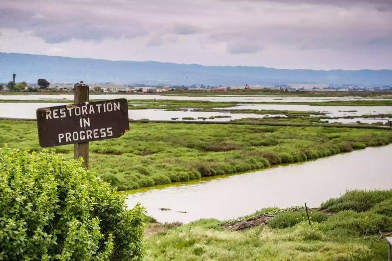Знак восстановления на заболоченных территориях в Альвисо Марш, заповедник Дона Эдвардса, юг залива Сан-Франциско, Калифорния, США