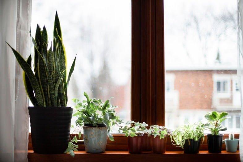 На подоконнике стоят разнообразные комнатные растения в горшках