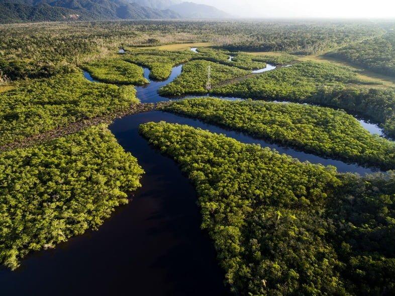 Тропические леса Амазонии, лес, снимок с дрона