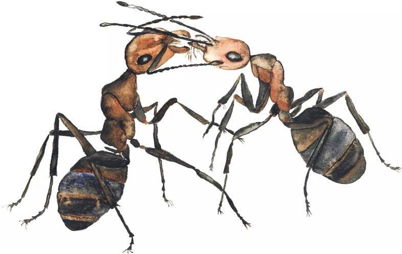 Два муравья – акварель