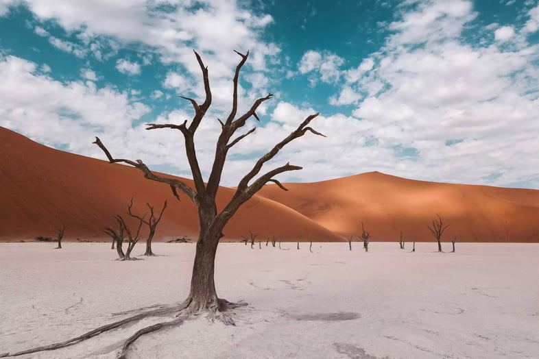 Дерево на белом глиняном плато на фоне красных дюн