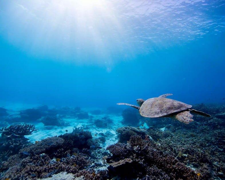Черепаха под водой