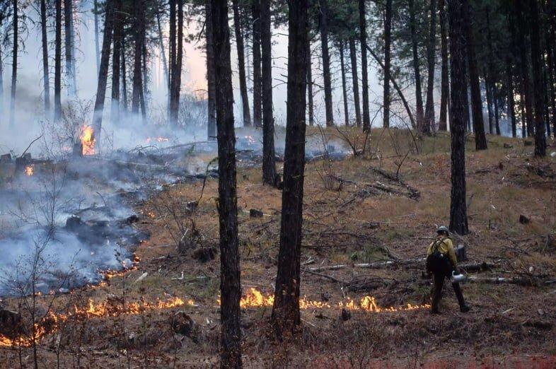 Лесной рабочий, проводящий контролируемый пожар
