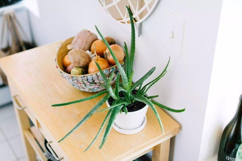 Растение алоэ вера на кухне
