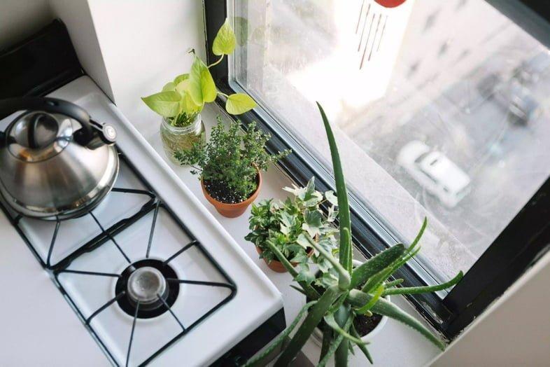 Розмарин и другие растения на кухне возле городского окна