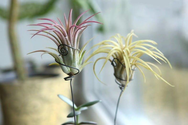 Два растения без горшков на подоконнике