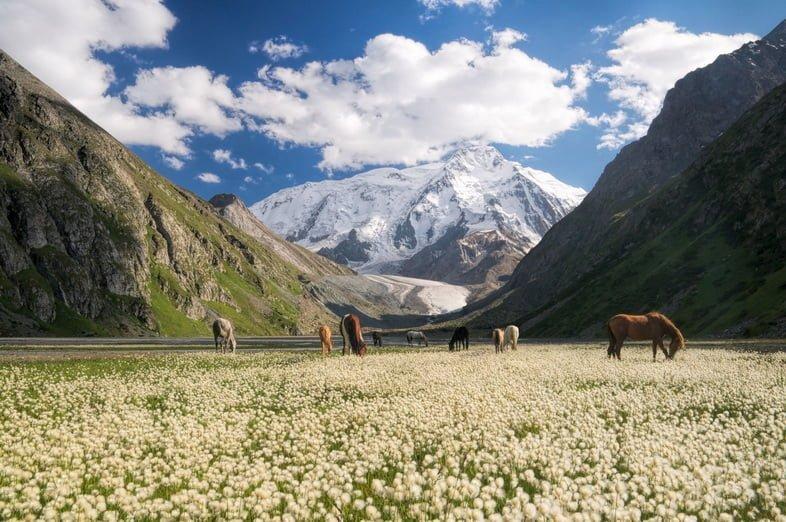 Горы возвышаются над стадом пасущихся лошадей в Кыргызстане.