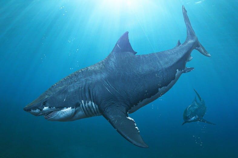 Две акулы-мегалодона рыщут.