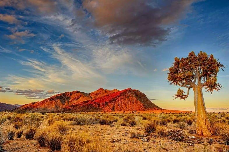 Алоэ дихотомическое и красная гора в пустыне Калахари в сумерках