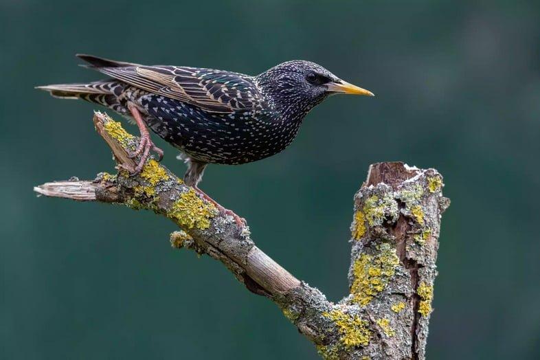 Темная птица с белыми крапинками сидит на ветке дерева