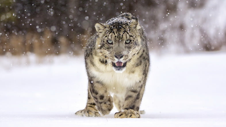 Зрительный контакт животного