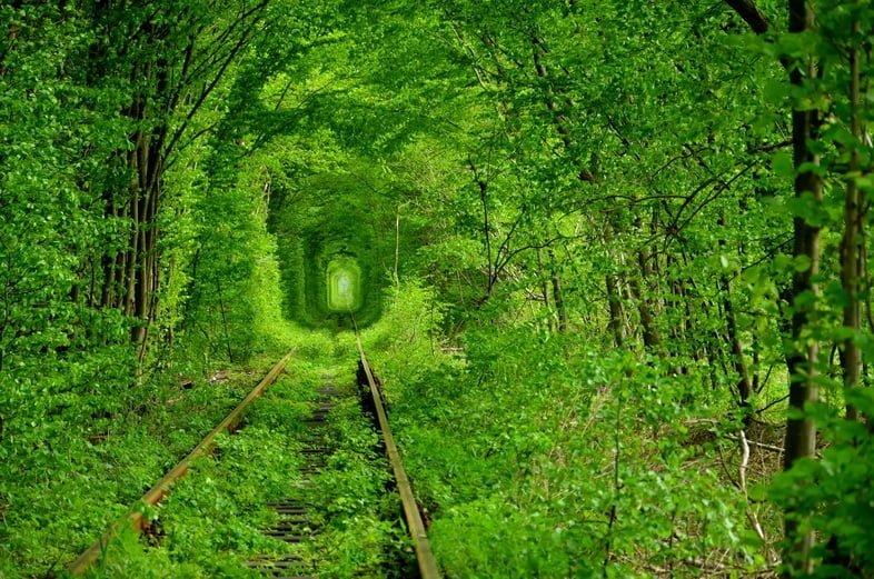 Пышная зеленая листва создает туннель над железнодорожными путями