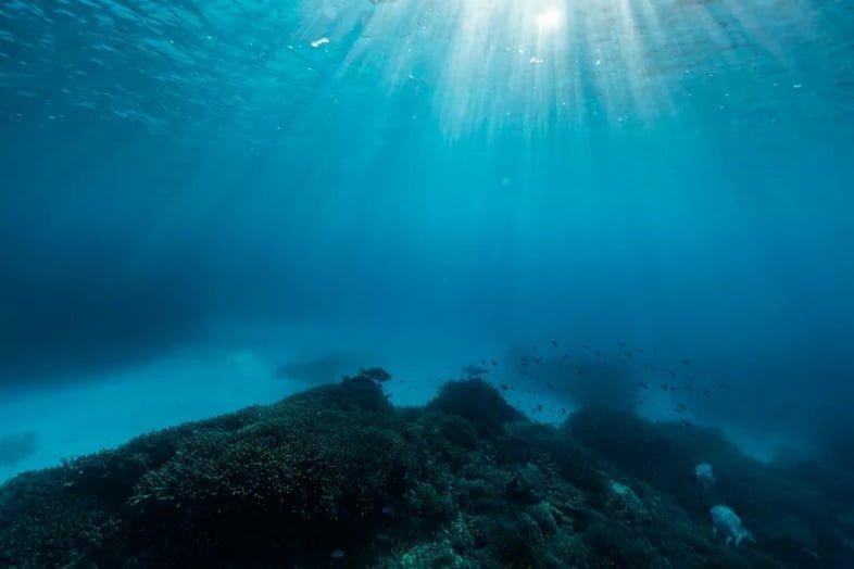 Подводный пейзаж