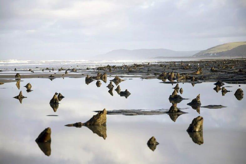 Пейзаж древних окаменелых пней на пляже.
