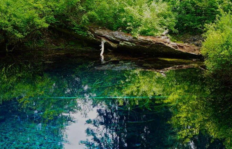 Чистое голубое озеро с деревьями под водой.