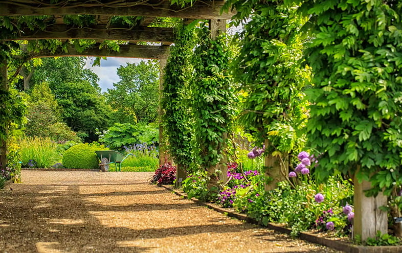 Деревянная решетка над гравийной дорожкой с пышными зелеными лозами, растущими вдоль вертикальных столбов, и фиолетовыми цветами вдоль основания