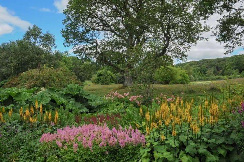 Розовые и желтые цветы с большими зелеными листьями вокруг большого тенистого дерева на лужайке в окружении живой изгороди в Розмур в Девоне