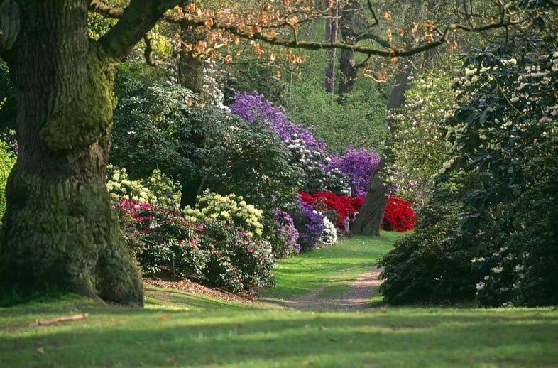 Зеленый склон холма в Сэвилл Гарден на Виндзорской Грейт-Уок, заполненный фиолетовыми, красными, белыми и розовыми цветущими растениями и кустами вдоль пешеходной дорожки.