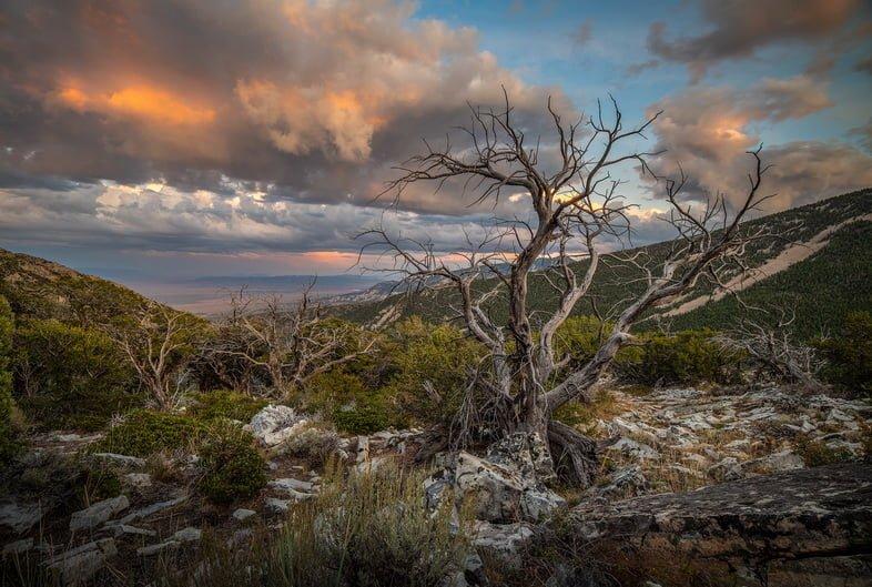 Голые деревья на склоне холма в национальном парке Грейт-Бейсин с видом на кустарник и пустынные пейзажи с розовыми грозовыми облаками